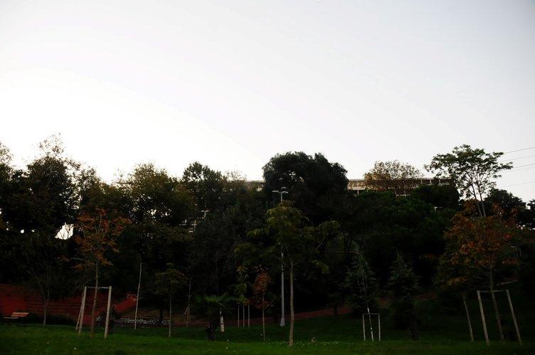 Doğan'ın kesmek istediği ağaçlar