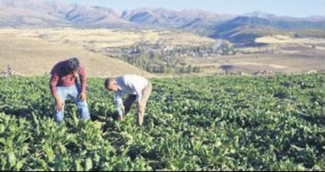 Pancar çiftçisine 54 milyonluk avans