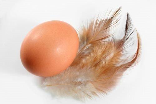 Yumurta kabuğunun faydaları