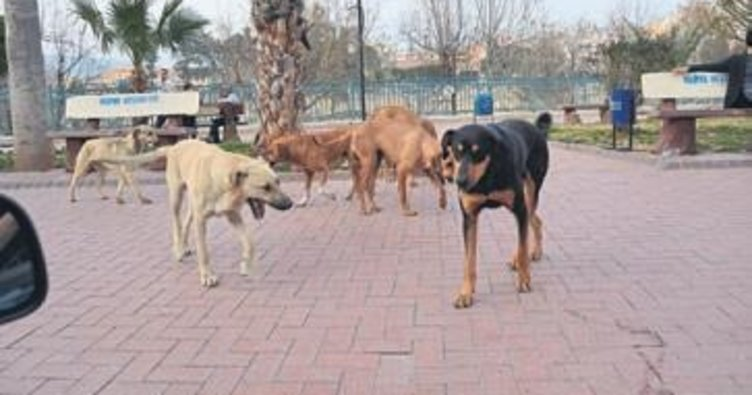 Silifke halkı sokak köpeklerinden dertli