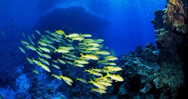 Okyanuslardaki oksijen azalıyor