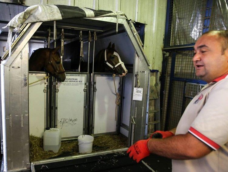 Milyon dolarlık yarış atları İstanbul'a getirildi