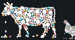 Antibiyotikli ve hormonlu besinlere dikkat
