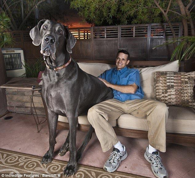 Dünyanın en uzun köpeği öldü
