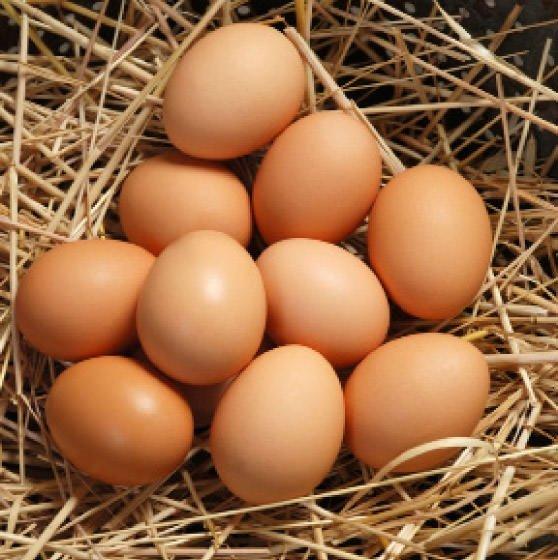 Yumurta kapıya dayandı!