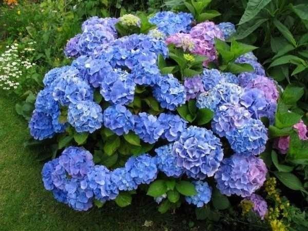 Dünyanın en pahalı 10 çiçeği