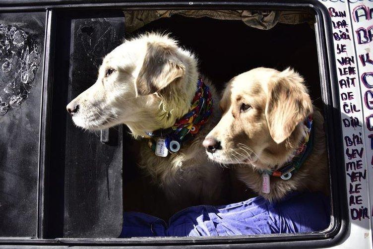 Eve dönüştürdüğü minibüste köpekleriyle yaşıyor