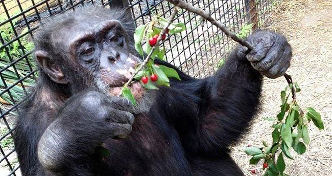 Şempanzelerin 'yasal birey' davası temyizde