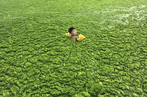 Çin'de su kirliliği mide bulandırıyor