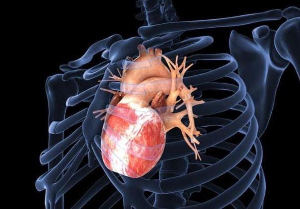 Kadın kalbi ile erkek kalbi arasındaki farklar