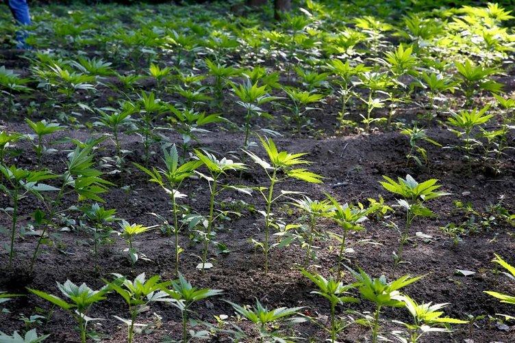 UNESCO Dünya Kültür Mirası listesinde yer alan Hevsel bahçelerinde iç acıtan görüntü