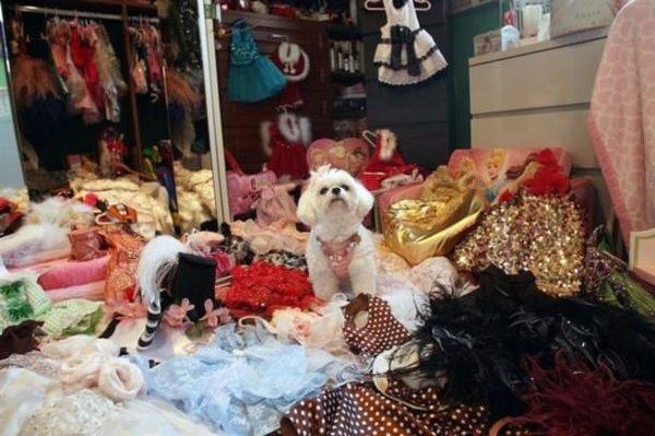 Köpeğine 1 milyon dolar bıraktı