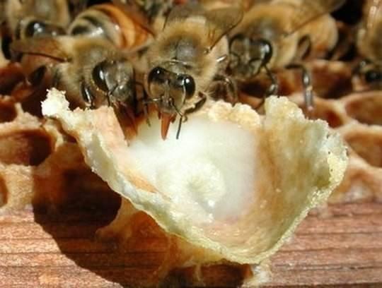 Cildinizi arı sütü ile arındırın