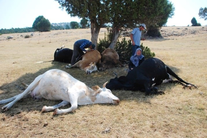 Telef olan ineklerine ağlayan çifte yardım