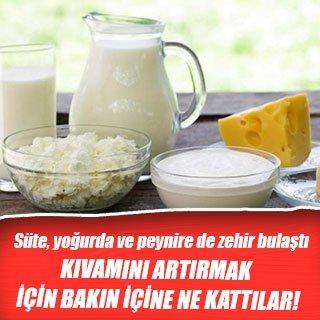 Süte, yoğurda ve peynire de zehir bulaştı