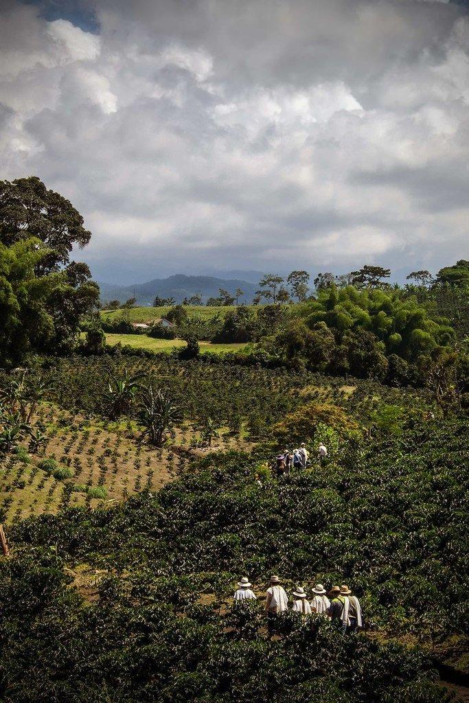 Dünyanın en iyi kahvesi orada üretiliyor