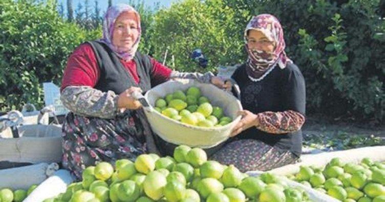 Mersin meyvecilikte Türkiye'nin başkenti