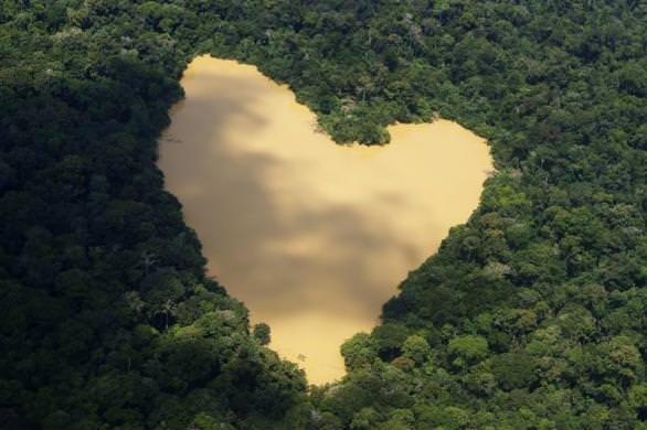 Amazonda hayat