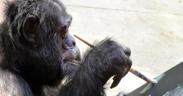 Michael Jackson'ın şempanzesi resim sergisi açıyor
