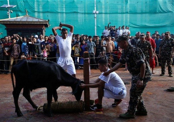Nepal'de  beklenen festival başladı!