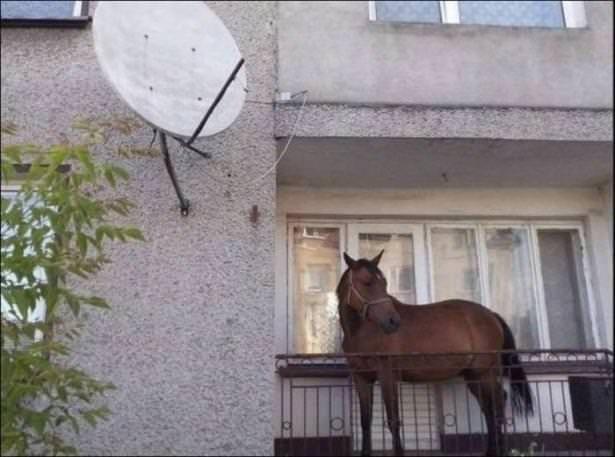 Sosyal medyada en çok paylaşılan fotoğraflar