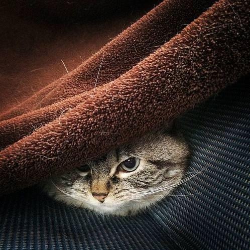 Zombi kedi şoku
