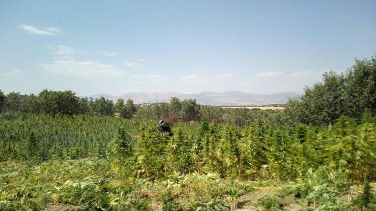PKK operasyonunda yaklaşık 2 ton esrar ele geçirildi