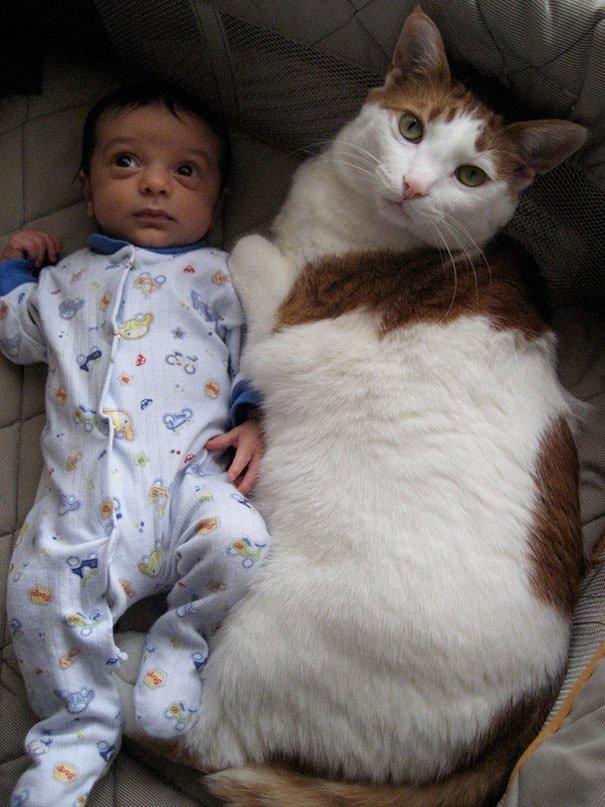 Minik kediler!