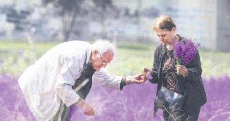Yazın habercisi yaban çiçekleri