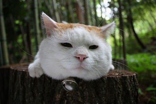 Bilim dünyasının en önemli 12 kedisi