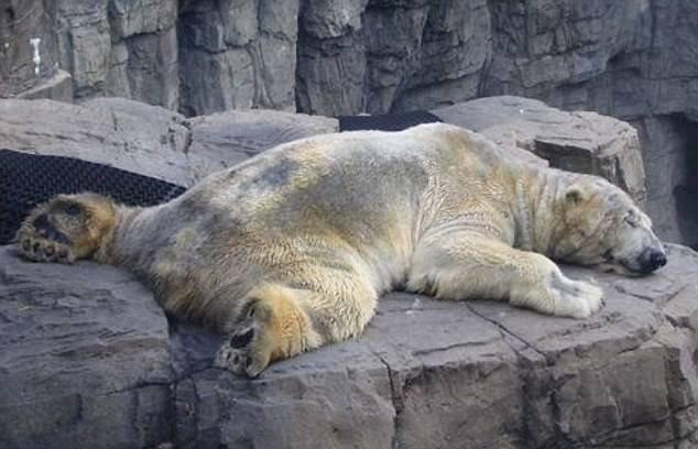 Dünyanın en mutsuz hayvanı