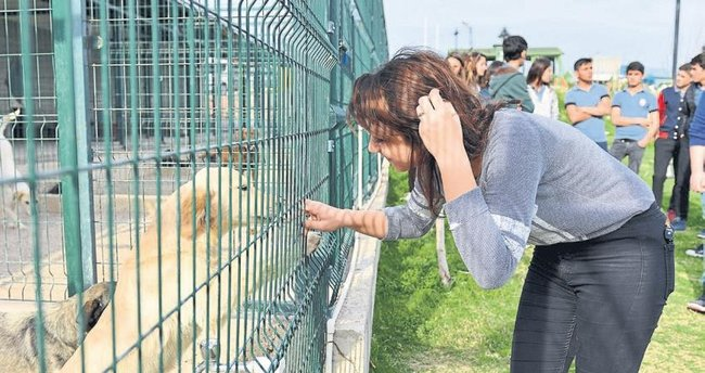 Hayvanlar için festival