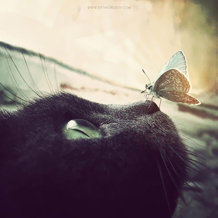 Kelebeklerin ölümle dansı