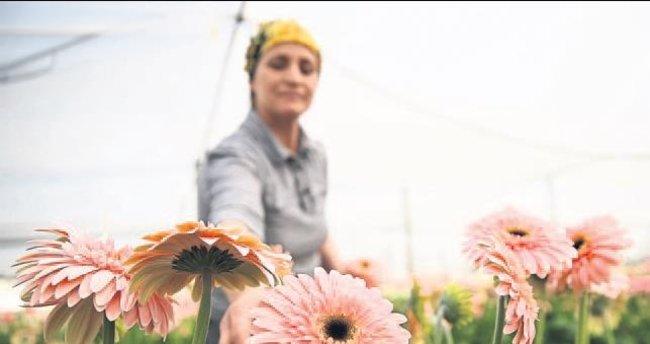 Çiçek için arazi aranıyor