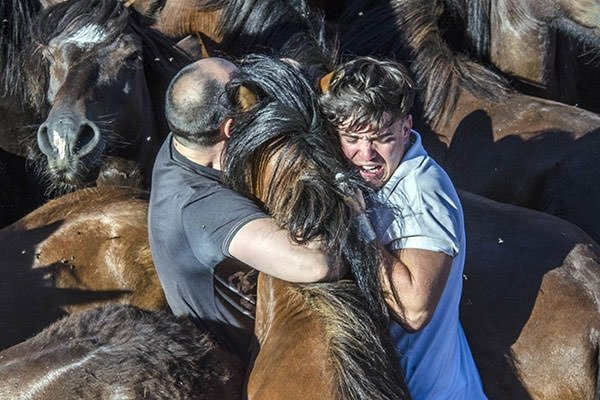 İspanya'da 500 yıllık at güreşi festivali