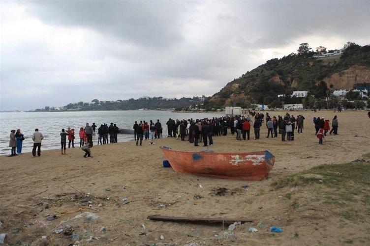 6 tonluk balina ağlara takıldı