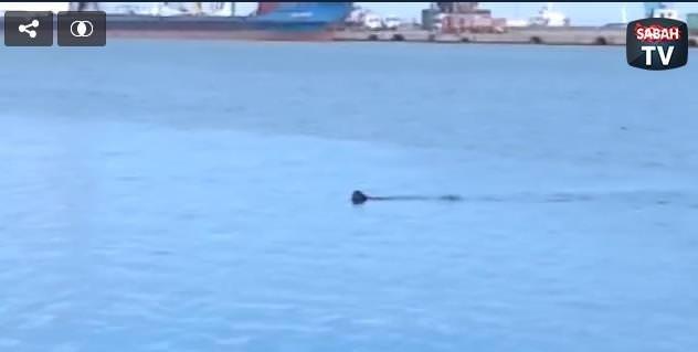 Başıboş köpek denizde karabatak avladı