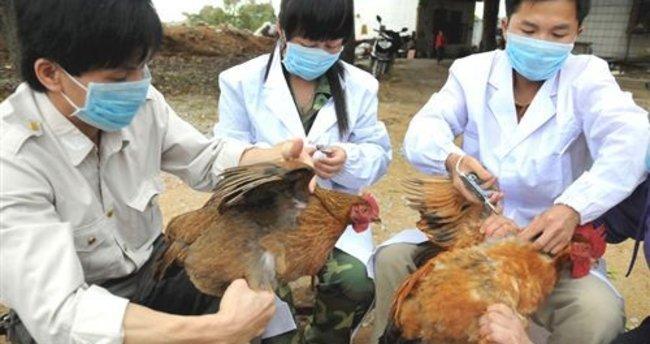 Kuş gribi nedir belirtileri nelerdir? Kuş gribi nasıl tedavi edilir?