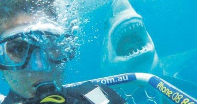 Köpekbalığıyla selfie modası