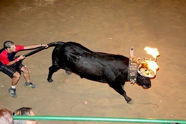 Dünyanın farklı bölgelerinden hayvanlara yapılan 18 yasal işkence