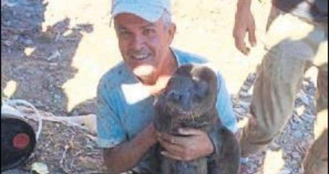 Yavru Akdeniz Foku'nu sevgiden öldürdüler