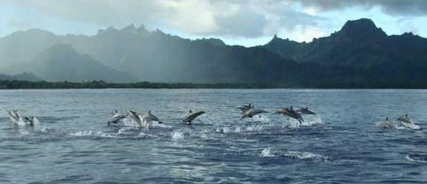 110 liraya tropik adada otel aldılar!