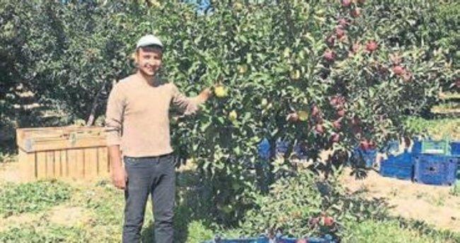 Aynı ağaçtan iki farklı elma yetişti