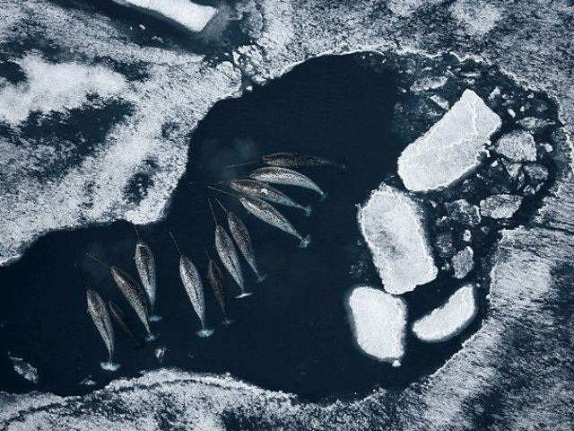 Kutuplarda hayat