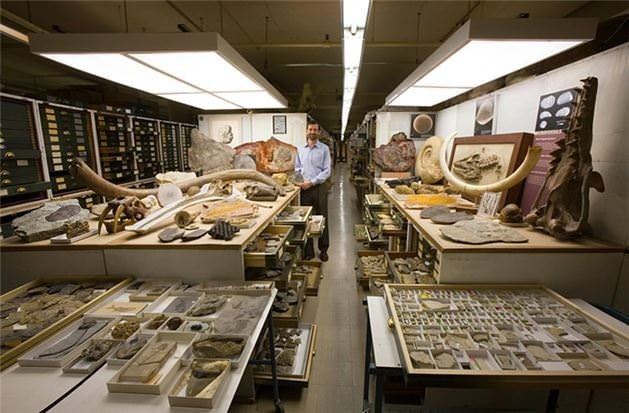 Doğal tarih müzesinin görülmeyen bölümü