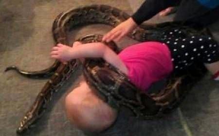 14 aylık bebek pitonla böyle oynadı