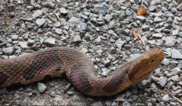Yılanların öyle bir özelliği var ki!