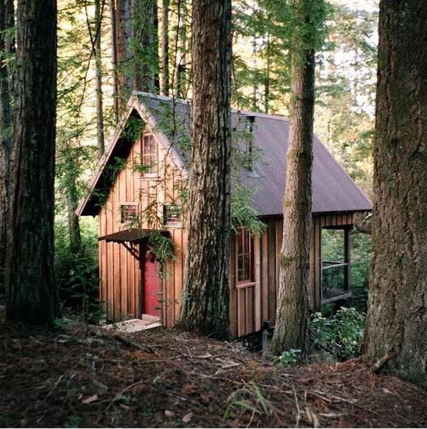 Ormanın içindeki bu doğal ofiste çalışmayı kim istemez ki?
