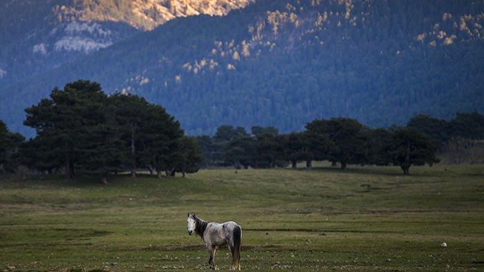 Yılkı atları turistlerin ilgi odağı oldu