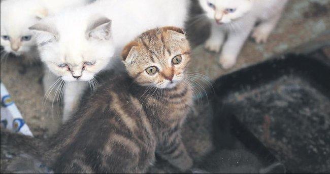 Kaçak kedilere özgürlük